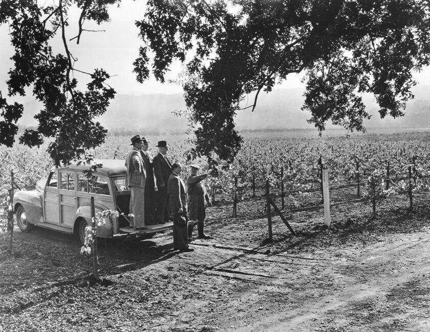 Historical Beaulieu Vineyard Photograph