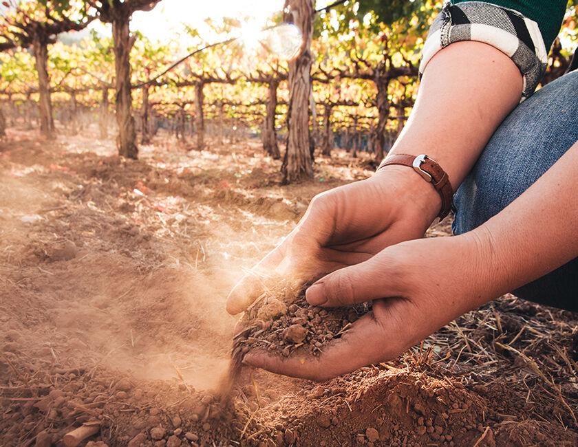 Soil of Rutherford Vineyard
