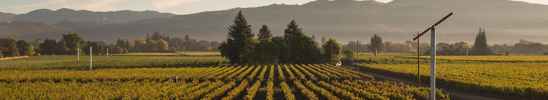 BV Vineyard Landscape
