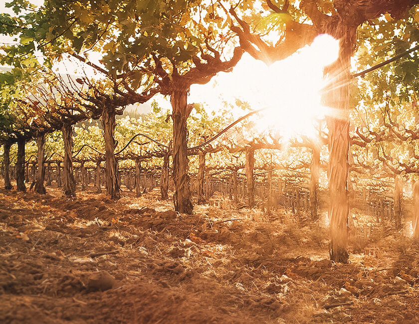 Soil of Beaulieu Vineyard