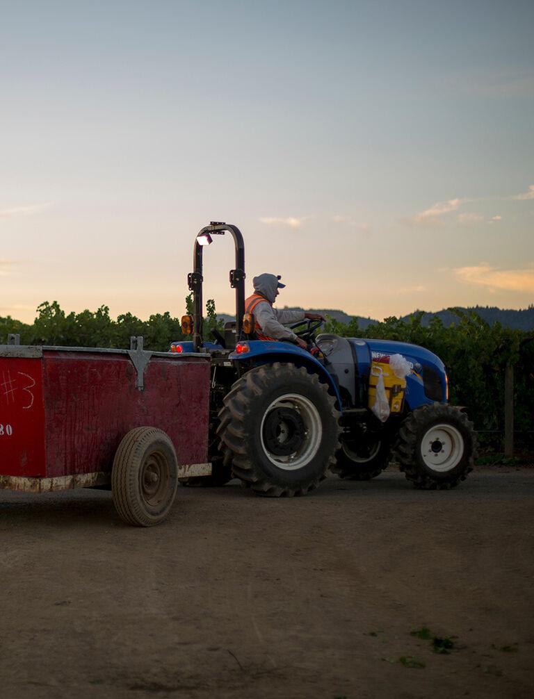 Tractor in Beaulieu Vineyard