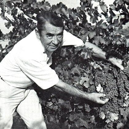 André Tchelistcheff in Vineyard