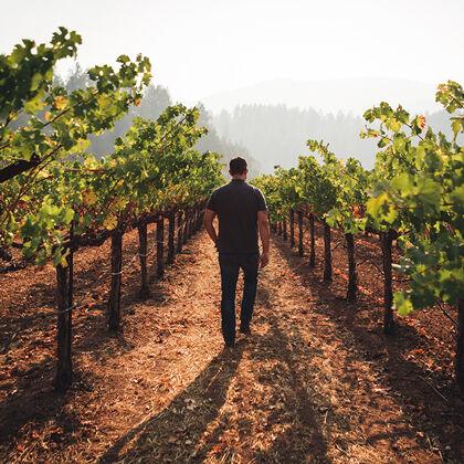 Walking Through Row of Beaulieu Vineyard