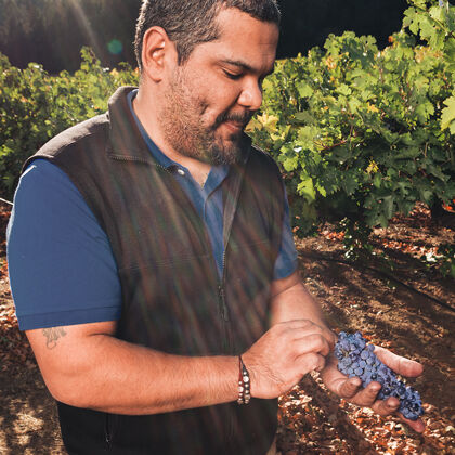 Grape Cluster From BV Vineyard During Harvest
